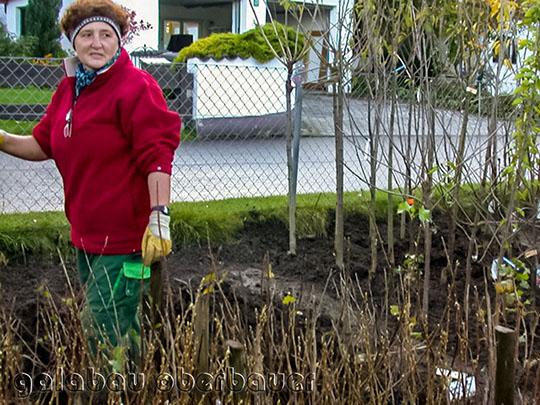 Gartentipps Pflanzzeit